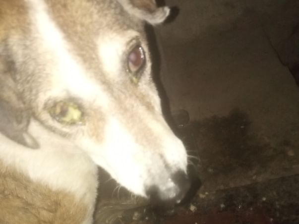 Providing Food, treatment and safety to Strays in my locality.