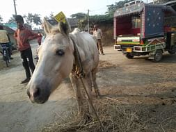 Help 'Spirit' retire in Dehradun