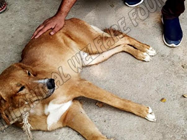 Help rescue and rehabilitate twenty accident-hit dogs in Delhi, India