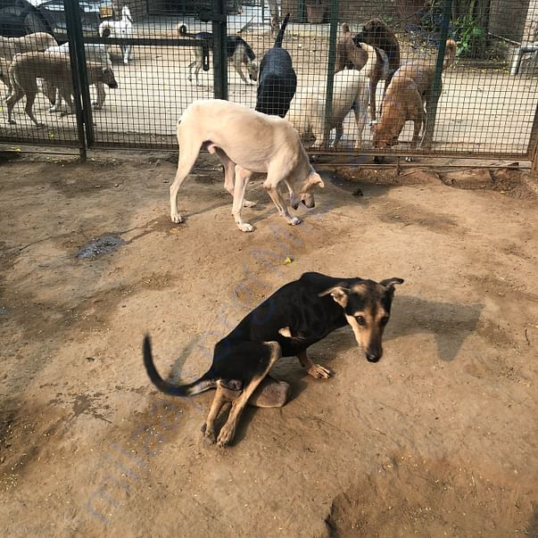 At the animal sanctuary, in the pen for disabled dogs