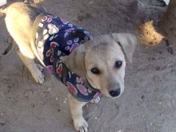 Help Aashram, A Permanent Home For Animals.