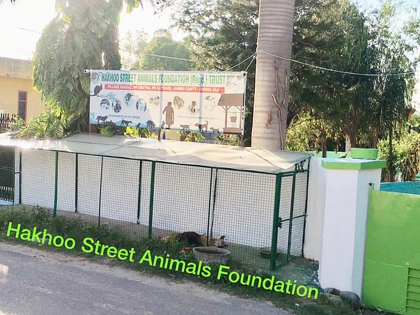 Help Us With Donation Countless Street Animals In Jammu Are Struggling
