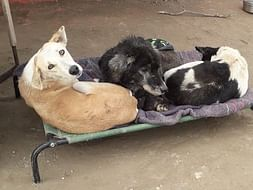 Help us give warm cots to old and sick dogs at shelter this winter