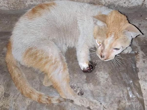 Help Dhanush The Cat For Treatment