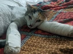 Help Cookie get surgery to walk again