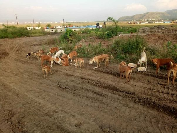 Help Us Feed Starving Animals At Panvel Airport Site