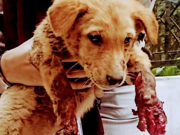 Help Build Critical Puppy Care Unit