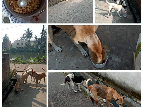 Help Me Save 90 homeless dogs of Chandannagar