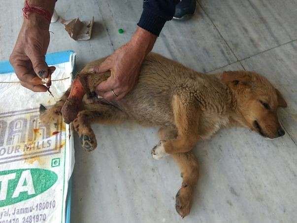 Help Us To Continue Saving Sick, Injured And Tortured Animals