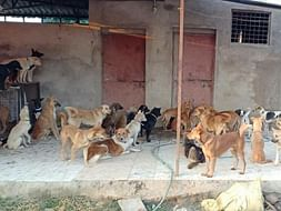 Help Us Vaccinate 80 Abandoned Dogs!