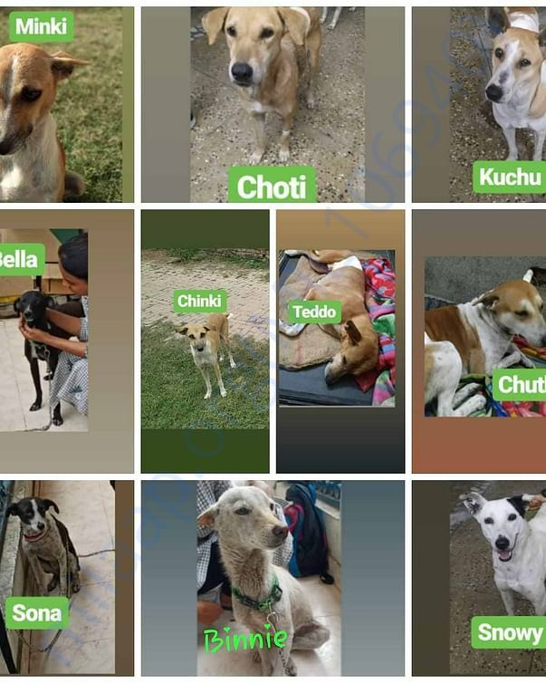 10 females are spayed and more are waiting for their numbers.
