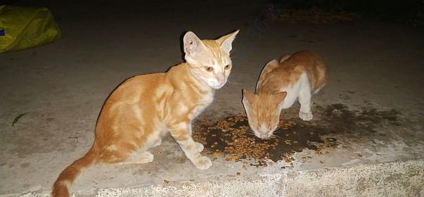 Mimi and Casper when they were younger