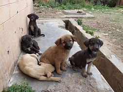 Save Indian Street Dogs from Starving!