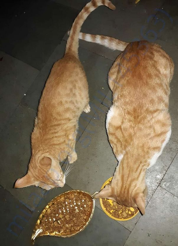 Twixy and Casper came up to the house to have their meal