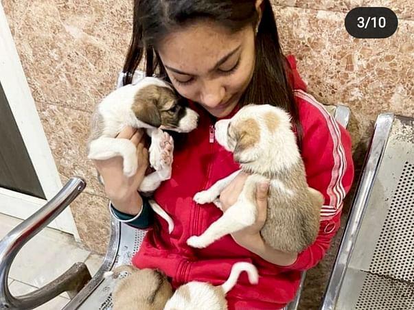 Help Anushka Save More Animals