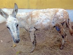 Help Our Donkeys Live