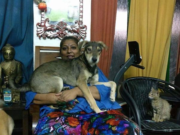 Help Anusha Build An Animal Sanctuary And Animal Hospital