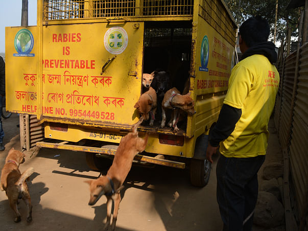 ANIMAL TRANSPORTING AND DISASTER RELIEF VEHICLE