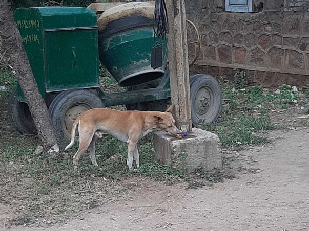 Support Stray Dogs