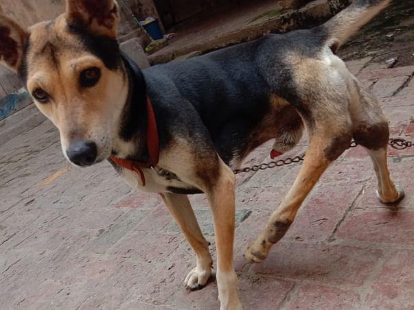 Vidyavati and pillu need your Help during Covid-19 India Lockdown