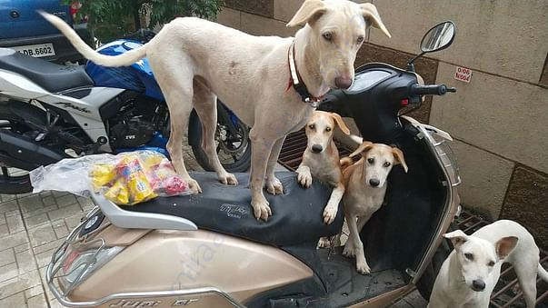 Dolly, Max and Casper. Waiting to see what i brought for them
