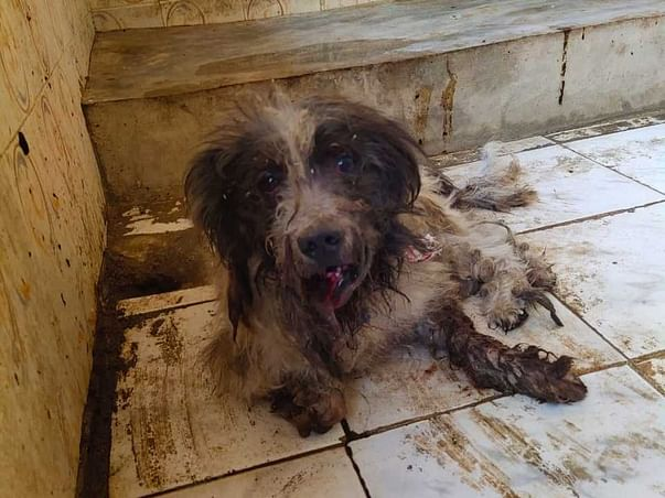 Help Me Save Abandoned and Street Dogs During The Coronavirus Crisis