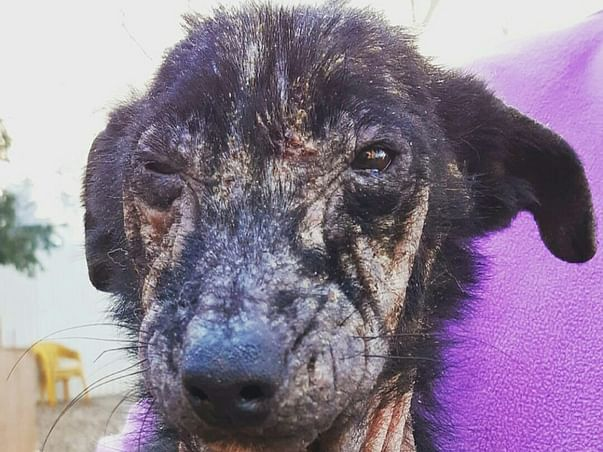 Help me get an Ambulance for Dogs!
