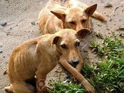 Help Animals During Lockdown