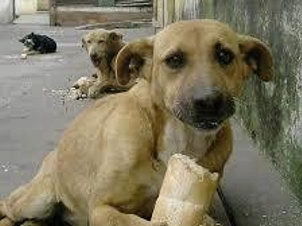 #LOCK DOWN-STRAY DOG'S NEED YOUR HELP