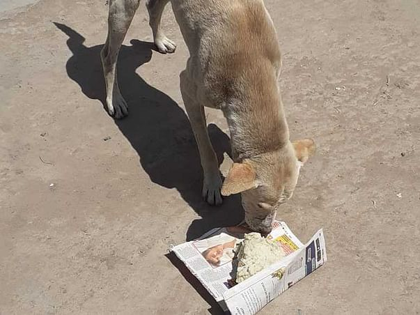 Help us to Feed Stray 400+ Dogs & 300+ Cows, to end Hunger Sufferings