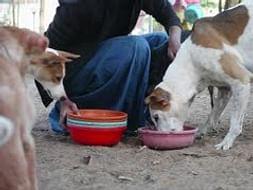 Feeding Stray Animals During Corona Outbreak