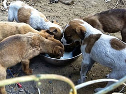 Help Me To Be A Stray Feeder During Lockdown