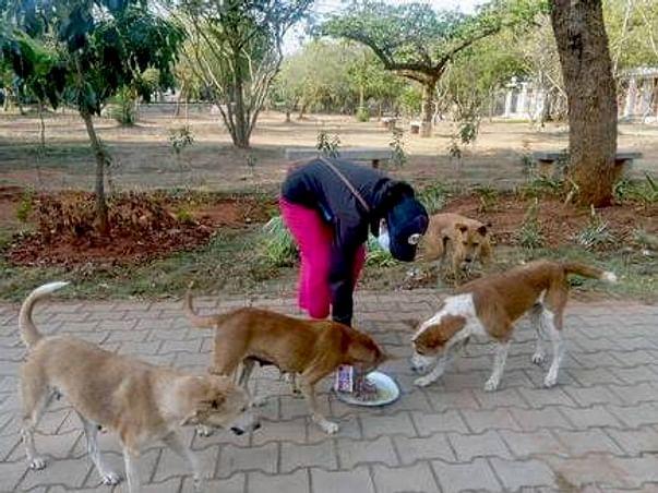 Stray animals face starvation during lockdown Coronavirus