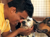 Help Ganesh Feed And Save Stray Animals And Pets Abandoned During COVID Pandemic