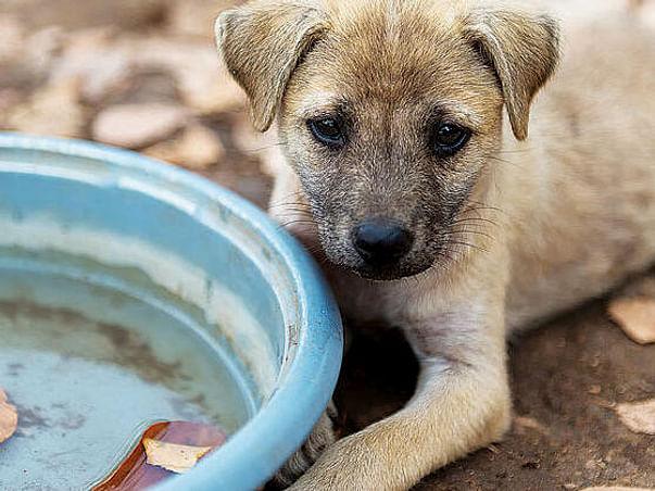 Stray Animals Relief Fund