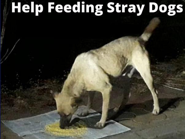 Help Feeding Stray Dogs - Donate