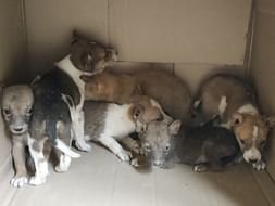 Help us to give treatment and food for the street animals in lockdown