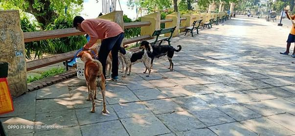 during the feeding time of strays
