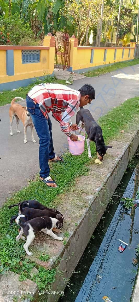 feeding of stray dogs during lockdown
