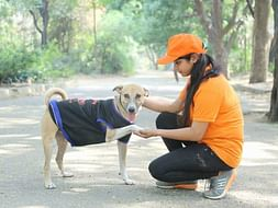 Help abandoning dogs and other pets for food water and shelter