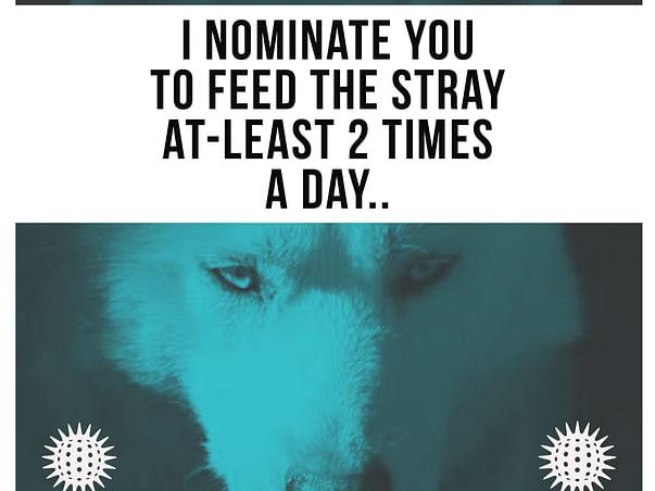Help me feeding the strays