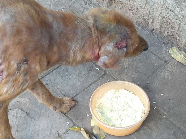 Help Me To Feed  Strays Eat One Meal