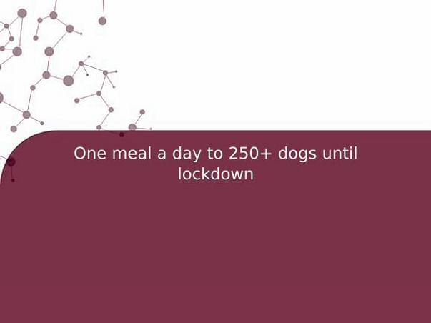 One meal a day to 250+ dogs until lockdown