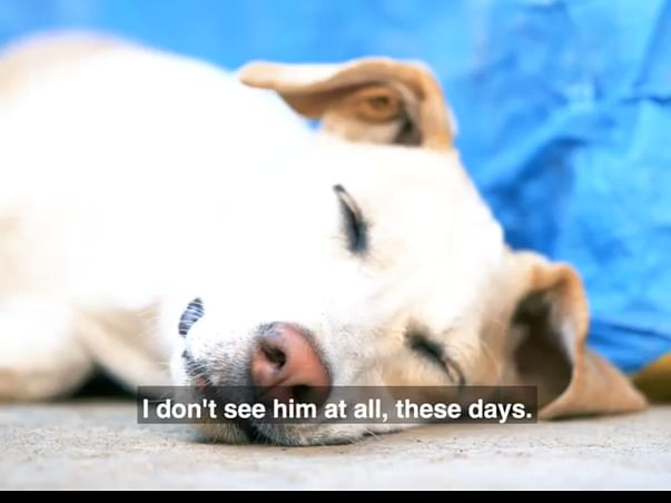 Save Life's of Street dogs