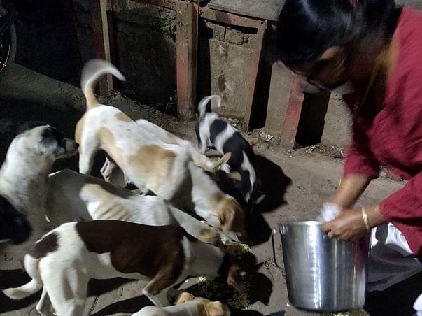 Help Sterilise Dogs inside Sealdah Platform