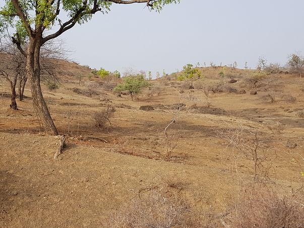 Sustainable Farming with Forest-- a hope to revive ECOSYSTEM