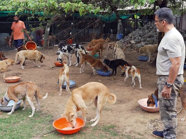 Help Rakesh to provide water for his 850+ dogs to survive this summer