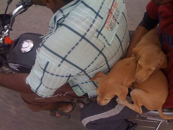 Help us to Save animals which are in distress