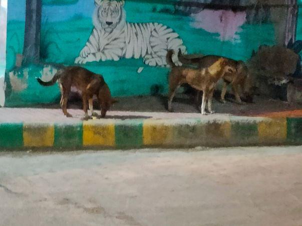 Help These Poor Ones