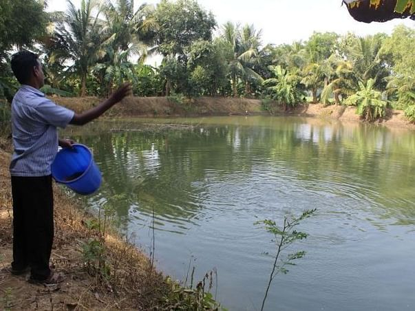 Help uplift the drowning fortunes of Odisha's fish farmers